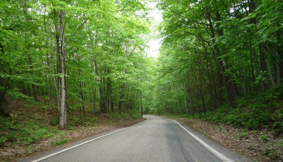 Tunnel of Trees Michigan